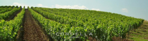 cordella-vineyards-crop-logo